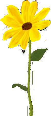 topinambur picnic les 3 flors