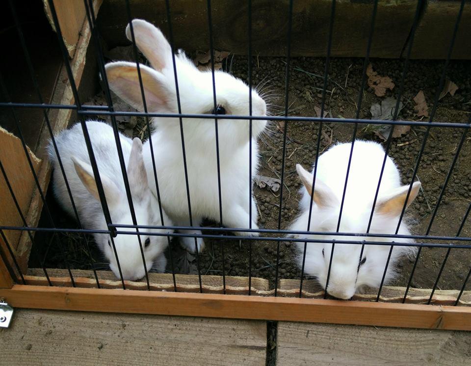 conejos animales niños picnic les 3 flors