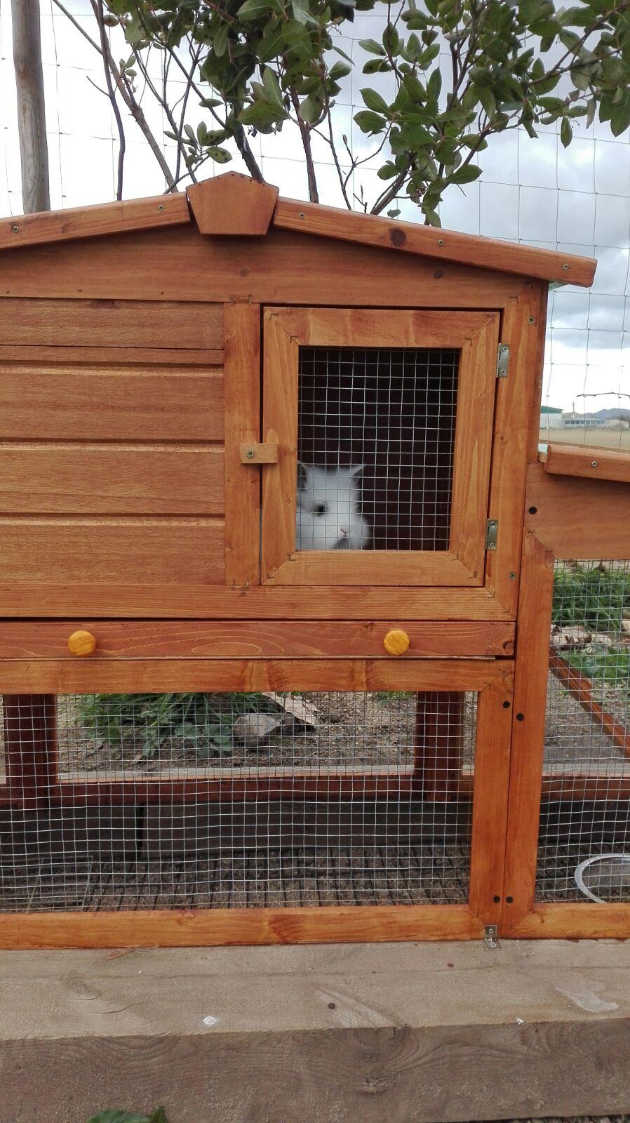 caseta conill mirant finestra picnic les 3 flors