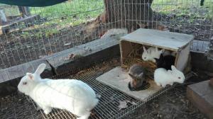 animals-com-conills-al-picnic-les-3-flors
