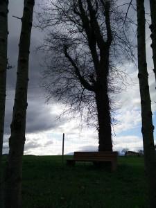 banc-arbre-picnic-les-3-flors