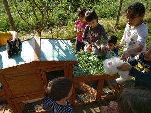 hora de donar menjar als conills picnic les 3 flors