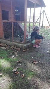 nena-contemplant-animals-picnic-les-3-flors