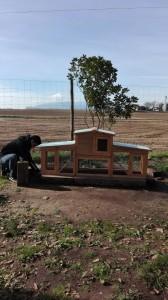 noi construint caseta picnic les 3 flors