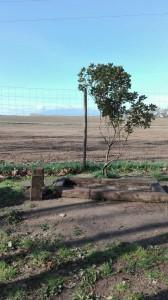 terreny on anira gabia conills picnic les 3 flors